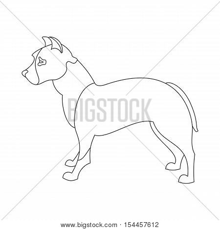 American pitt bull terrier. Obedience doggy in linear style. Vector illustration