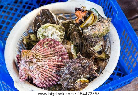 Variety Of Live Oysters And Shellfish