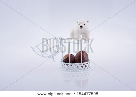Polar bear c Polar bear near an open cage with chesnut on white background