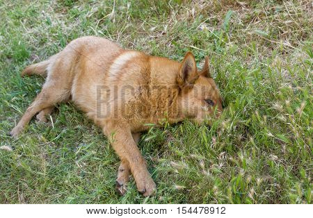 Cute mixed breed dog resting in summer grass