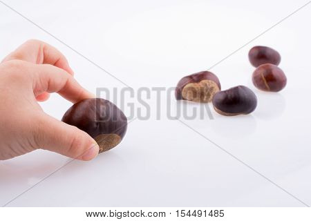 Child hand holding fresh chestnuts in hand