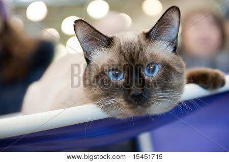 "International Exhibition Of Cats ""catsburg"""