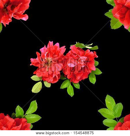 Background Texture Made Of Red Rosehips  Flowers  And Place For Text