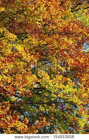 Elms Beeches And Other Trees With Fantastic Colorful Leaves