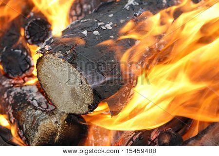 glowing logs burning on campfire closeup
