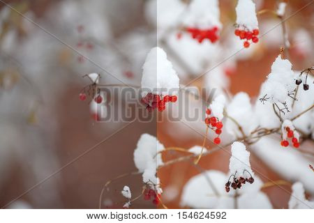 Photo before and after the image editing process. Red berries covered with snow winter scene