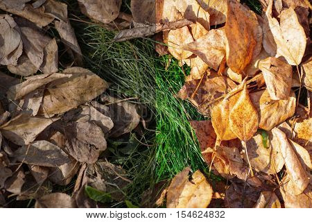 Photo before and after the image editing process. Fallen yellow autumn leaves on the bright green grass
