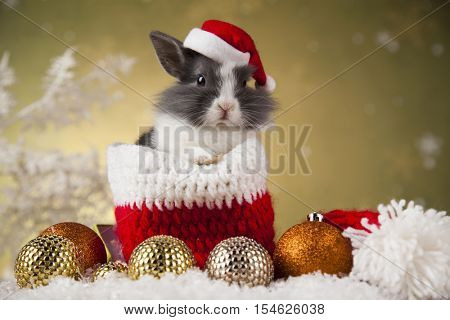 Rabbit in red santa hats, Holiday Christmas background