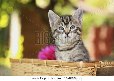 Kitten Kitty Cat. Portrait of green-eyed cat in nature