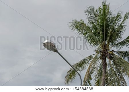 Street lamps with a dark background coconut.