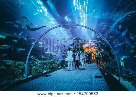 Dubai, U.A.E. - Circa August, 2016: People viewing marine life in the underwater tunnel at the Dubai aquarium, a popular tourist attraction