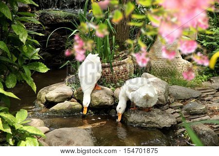 close up shot of two white duck in nature
