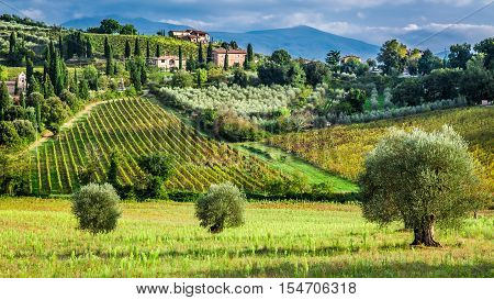 Vineyards And Olive Trees In A Small Village, Tuscany