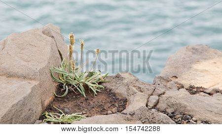 Plant Growing On Black Sand - Iceland