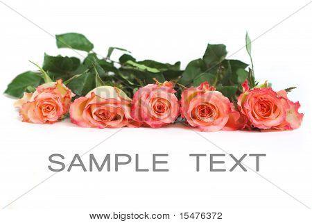 fresh five roses
