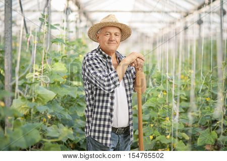 Mature farmer posing in a greenhouse