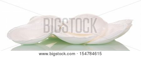 Gaskets for breast feeding mother isolated on a white background.