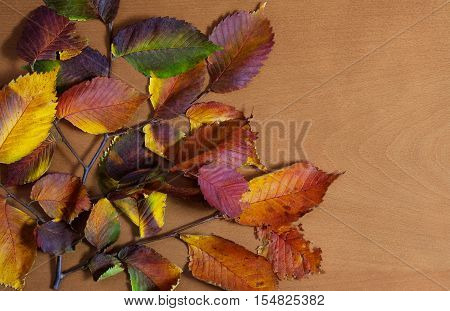 Branch with autumn leaves on a wooden background