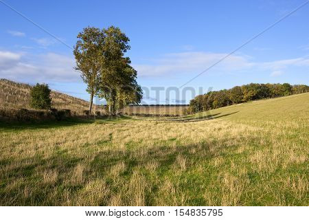 Wooded Valley