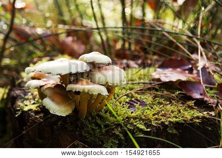 Close Up Of Toadstools Growing On The Woodland Floor