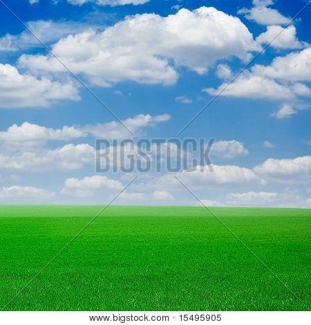 Campo verde Primavera, coberto por uma gramínea e o lindo céu azul