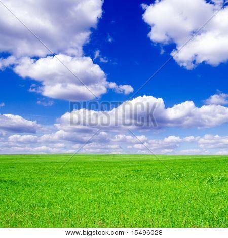 Grünen Wiese, blauer Himmel, weiße Wolken