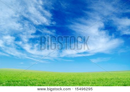 spring field and the blue sky covered by white clouds
