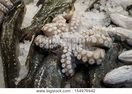 Octopus lies on the fishes in the fish shop. Octopus for sale. Horizontal. Close-up.