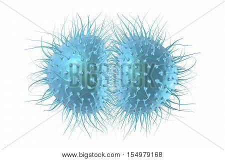 Bacteria Neisseria gonorrhoeae or Neisseria meningitidis, gonococcus and meningococcus, 3D illustration. Bacteria which cause gonorrhoeae. Bacteria which cause meningitis