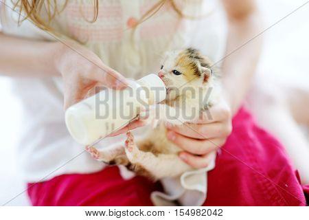 Adorable little girl feeding small kitten with kitten milk from the bottle at summer day
