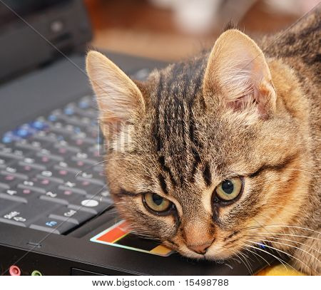 The kitten has a rest on the keyboard of a personal computer.