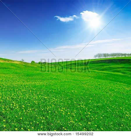 field covered by a grass