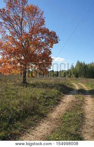 road, muddy, mud, nature, forest, dirt, country, track, way, landscape