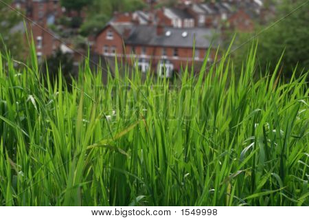 Sunny Green Grass On A Country Houses Background