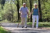 picture of elderly couple  - Elderly couple walking through the parc hand in hand - JPG
