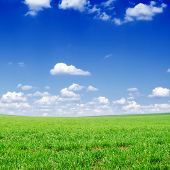 green field and white clouds