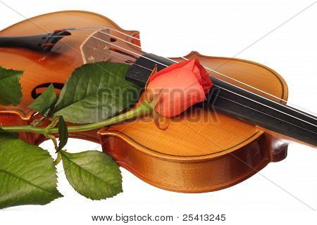 a part of violin and a coral rose