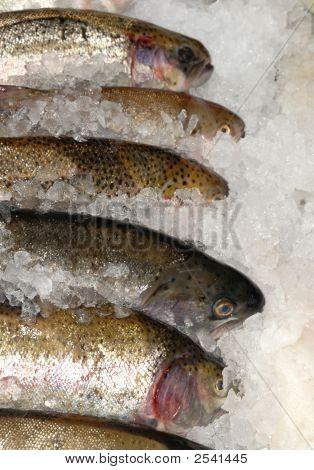 Caballa en hielo en la losa de la pescadería