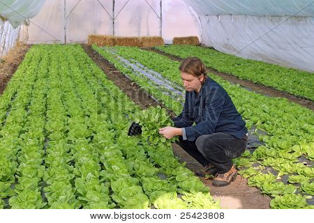 Young Farmer In Greenhouse