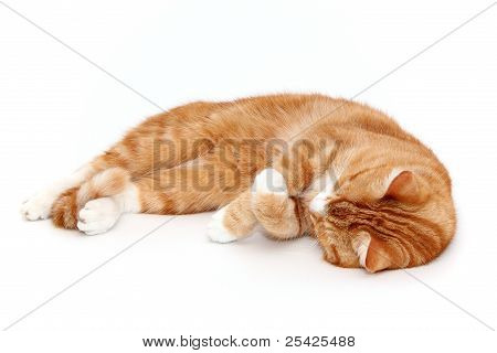 Desolate Tabby Tom Cat
