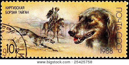 Taigan Kirghiz Dog Hunting With Golden Eagle