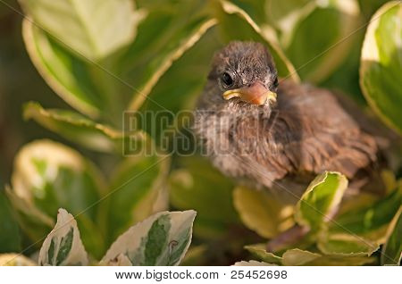 Very young bird looking at you