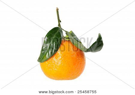 Tangerine on branch.