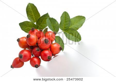Rose hips (Rosa canina), close-up