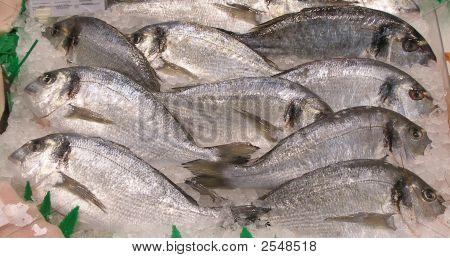 Pantalla de peces