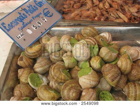 Big Snails At Market