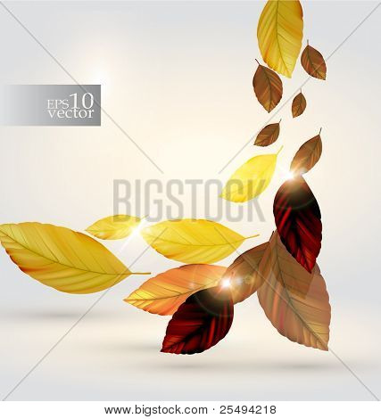 Vector autumn leaves design
