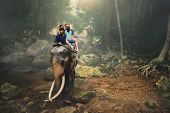 tourist couple riding elephant through thai jungle by river on koh samui thailand poster