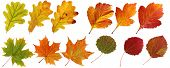 Collection Of Autumn Leaves: Oak, Maple, Hawthorn, Aspen. Set Of Yellow, Orange And Red Leaf, Isolat poster