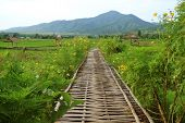 Bamboo Walkway On Vibrant Green Plantation And Paddy Field In Nan Province Of Thailand poster